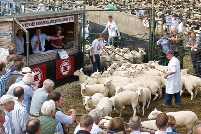 bicester-thame-sheep-market-400x267